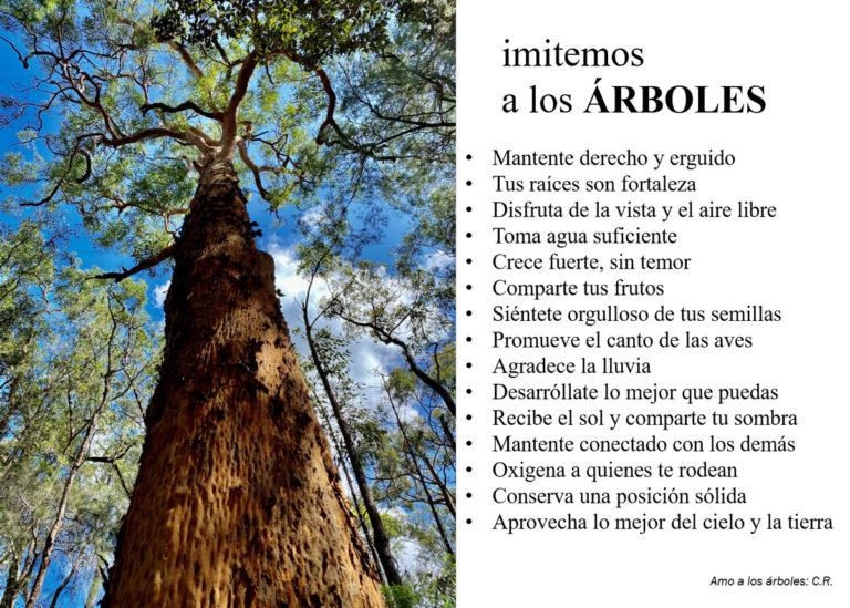 Amo los árboles | Carlos Requena